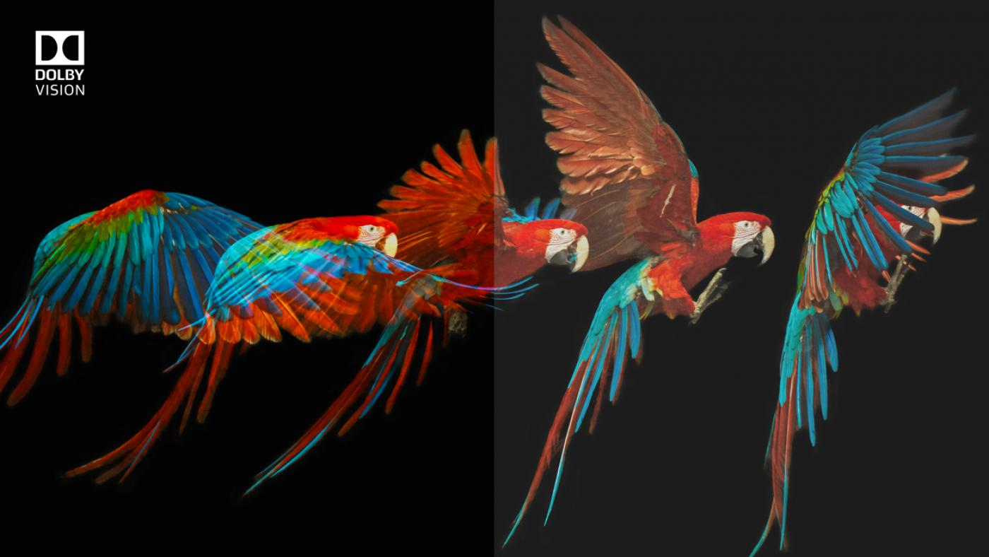 Parrots in flight with feather detail