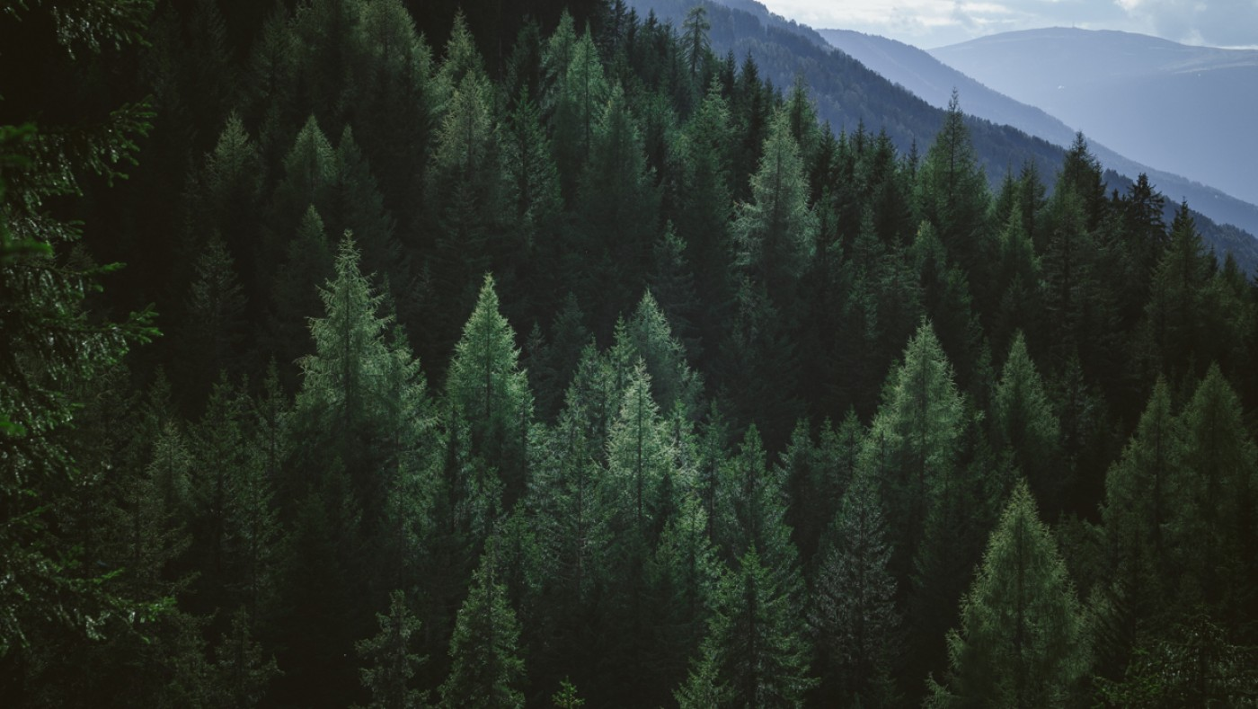 Forest of trees on mountains